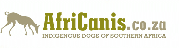 AfriCanis: Indigenous Dog of Southern Africa